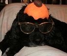 Happy Howl-oween-A Dog Halloween Story