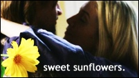 suliet // sweet sunflowers