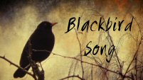 blackbird song - multi OC's